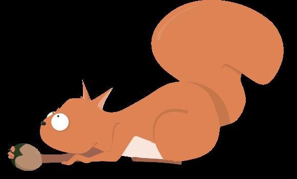 ecureuil noisette