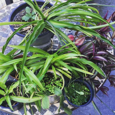 troc de  Plantes, sur mytroc