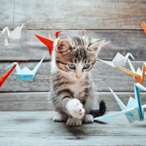 troc de  vermifuge biocanina chien chat, sur mytroc