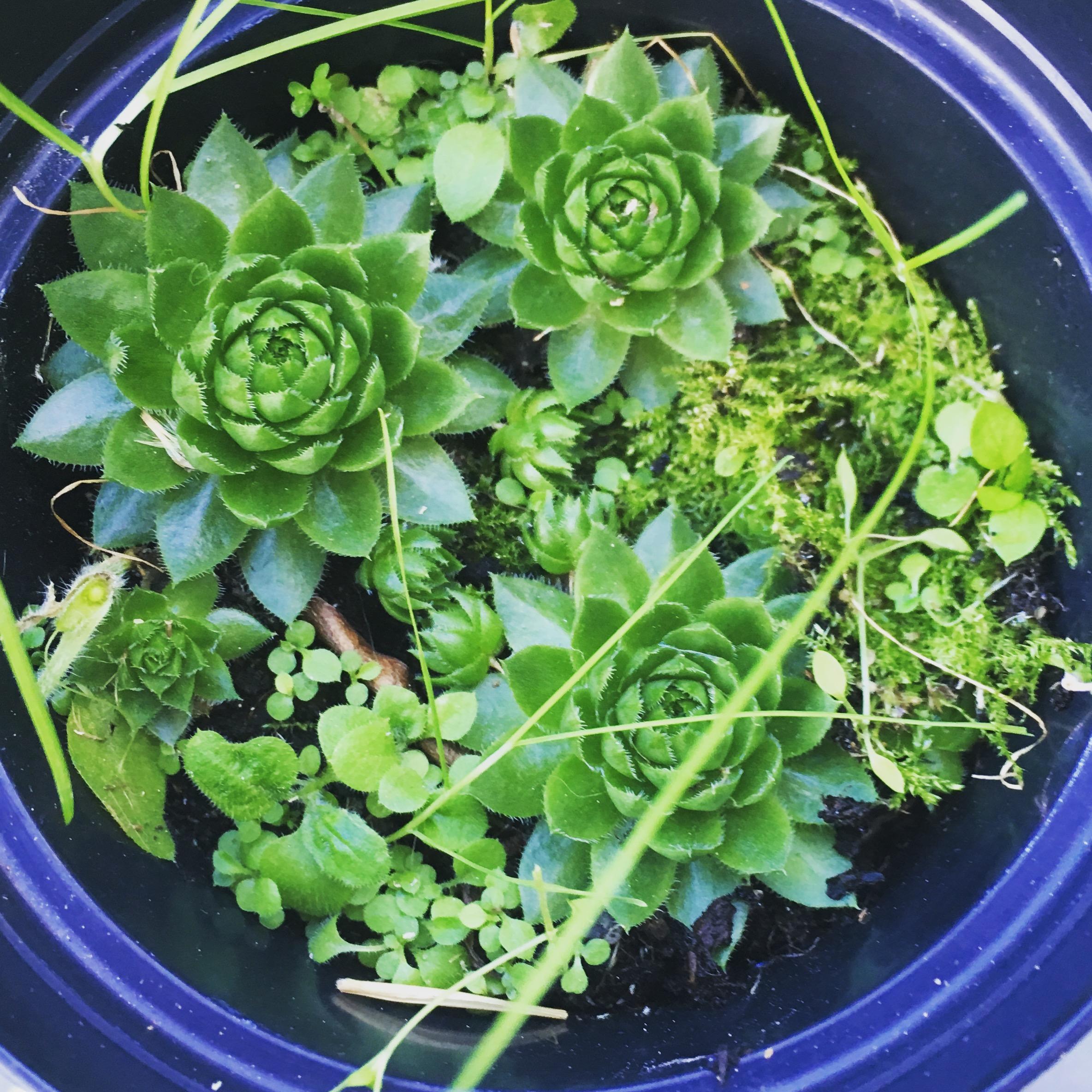 troc de troc plantes image 2