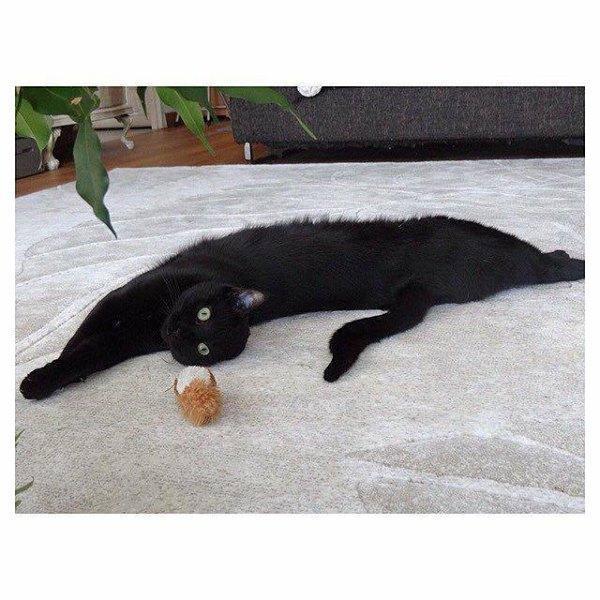 troc de troc echange chatte malheureuse en appart contre bons soins. image 0