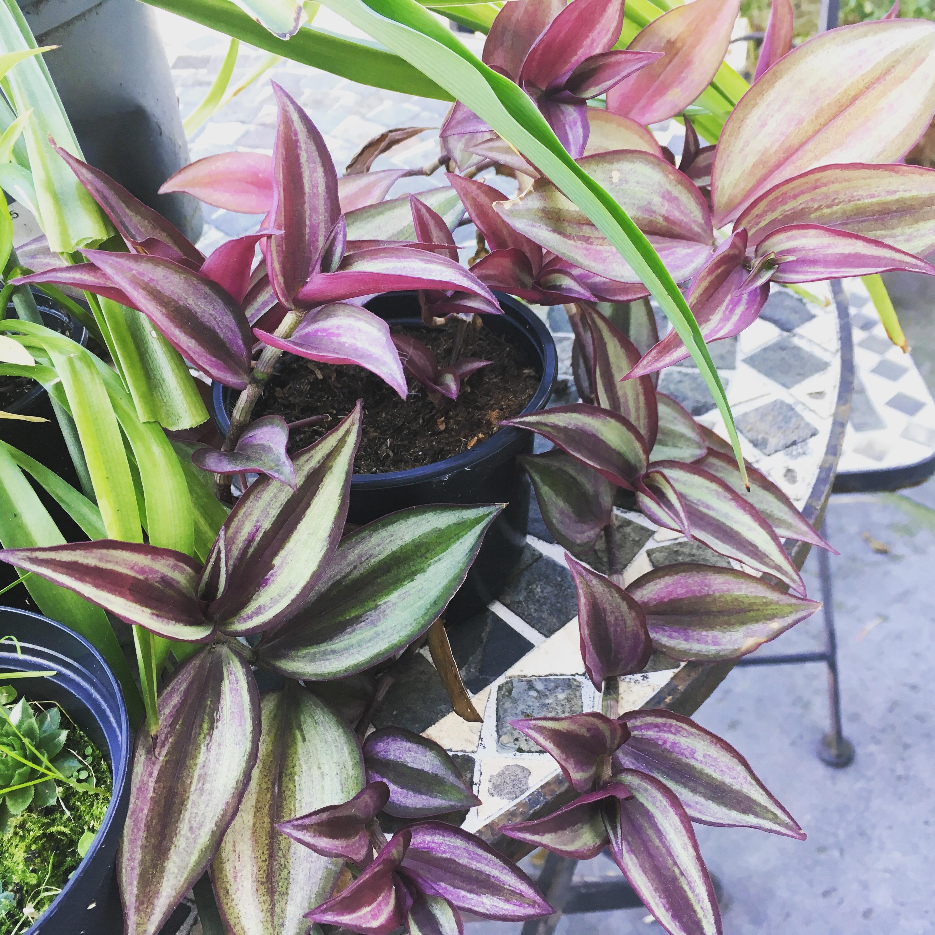 troc de troc plantes image 1