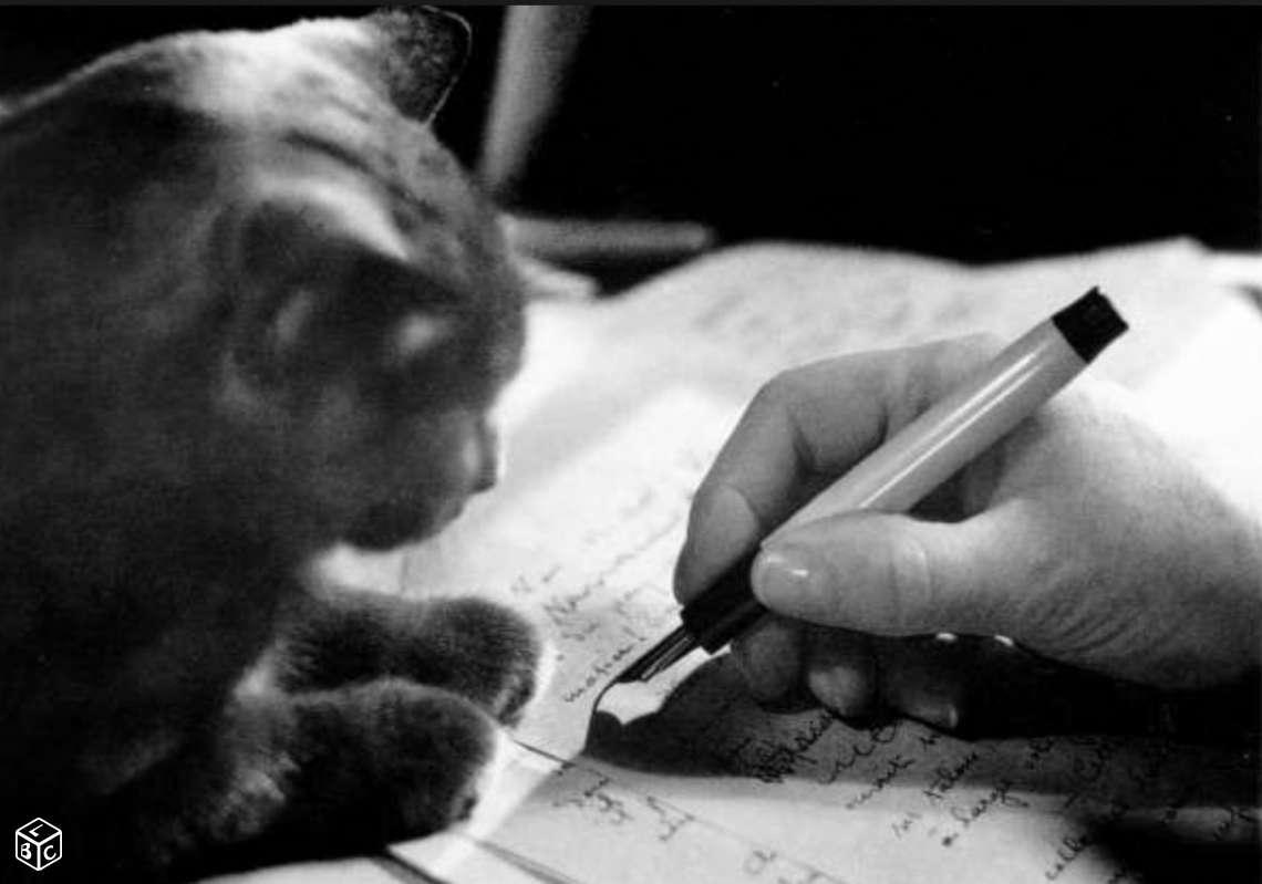 troc de troc création d'un site internet pour une association (chats) image 1