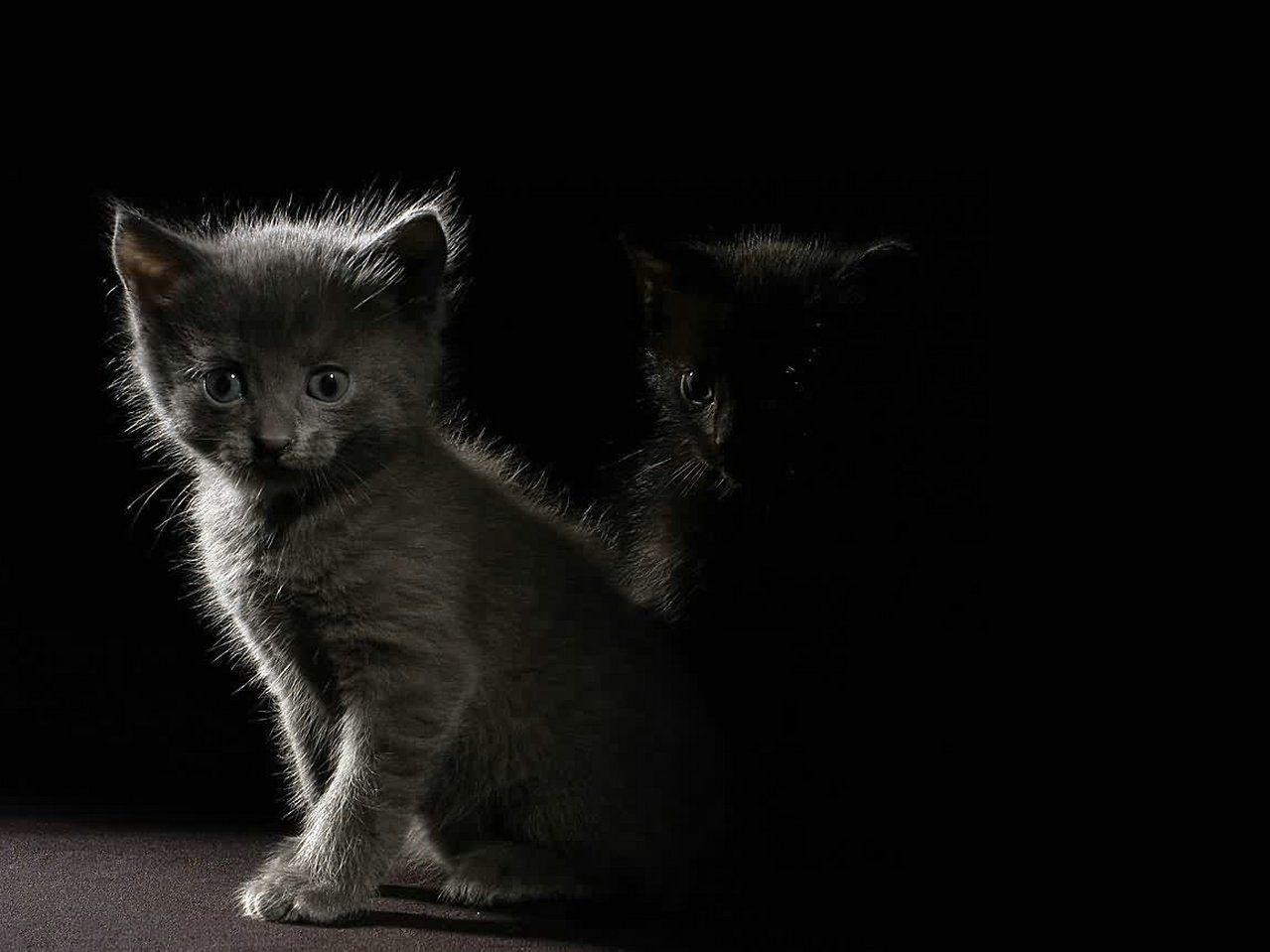 troc de troc création d'un site internet pour une association (chats) image 0